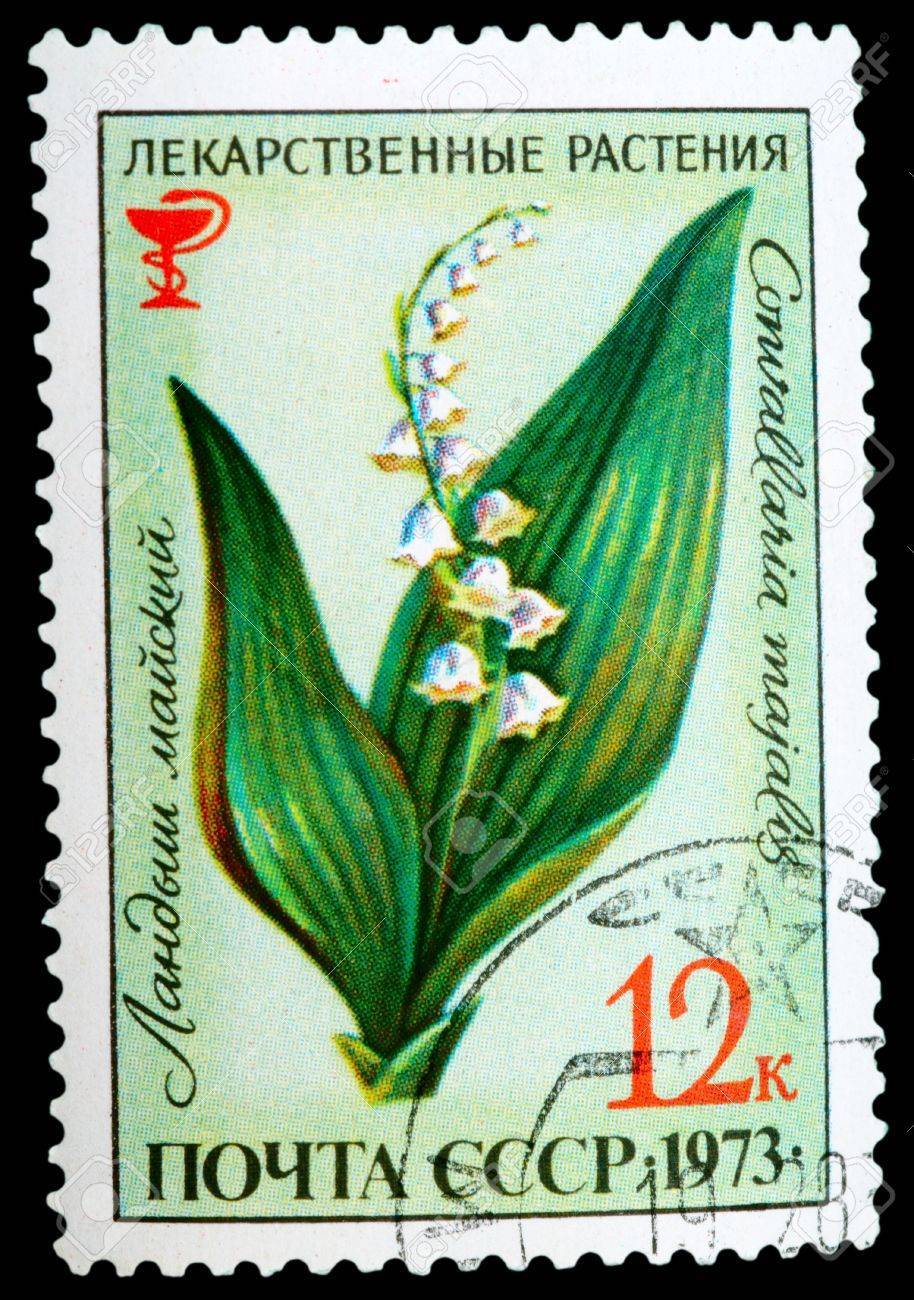 USSR - CIRCA 1973: A stamp printed in USSR shows a Convallaria majalis, herb series, circa 1973 Stock Photo - 11804806