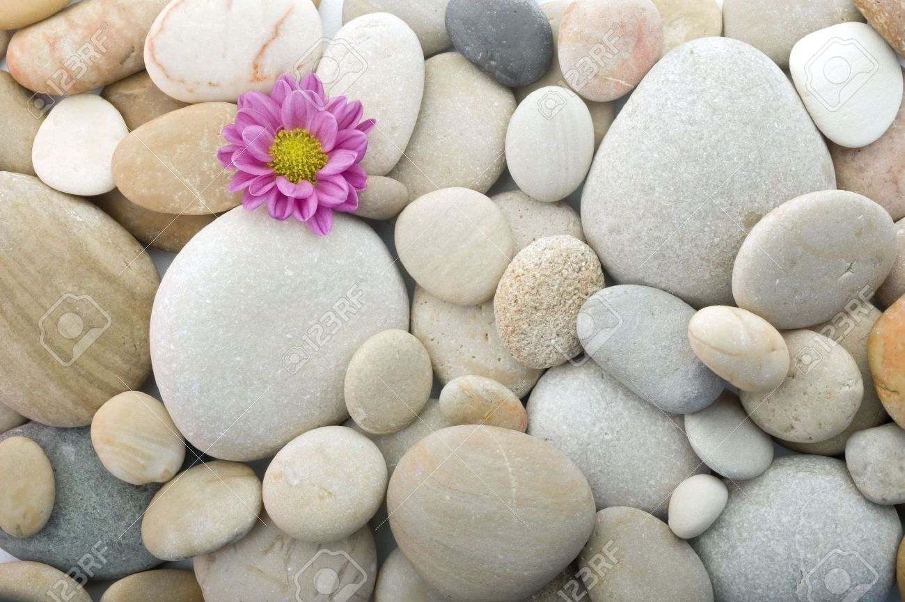 closeup of pebbles background with a pink daisy Stock Photo - 3213128