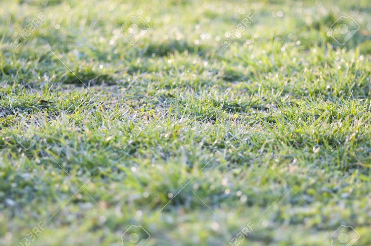 first green grass of the year, beginning of march Stock Photo - 6660083