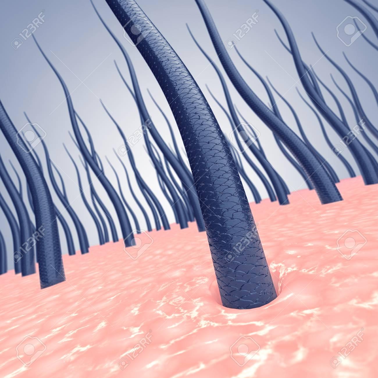 Gesunde Menschliche Kopfhaut Und Haarsträhnen, Haarwachstum Stärkung ...