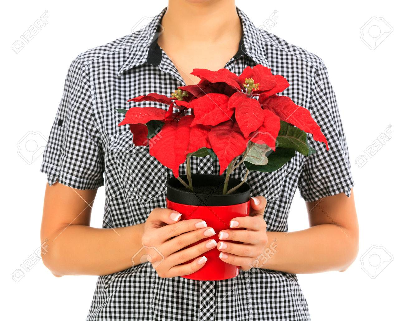 female holds a poinsettia, white background, copyspace Stock Photo - 24722568