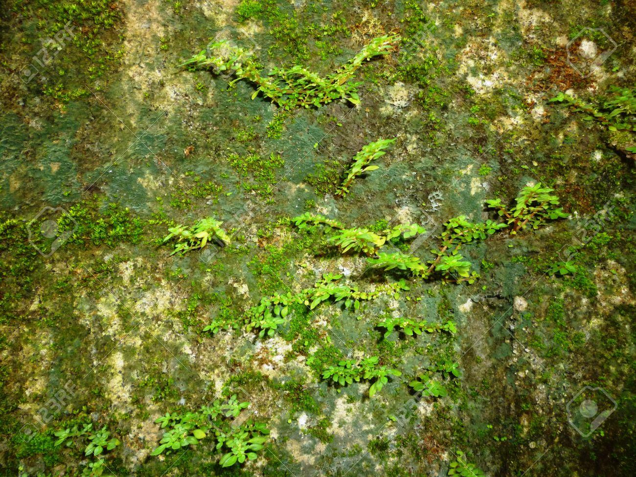 Nahtlose moos alte grüne wand steinmusterform grau textur ...