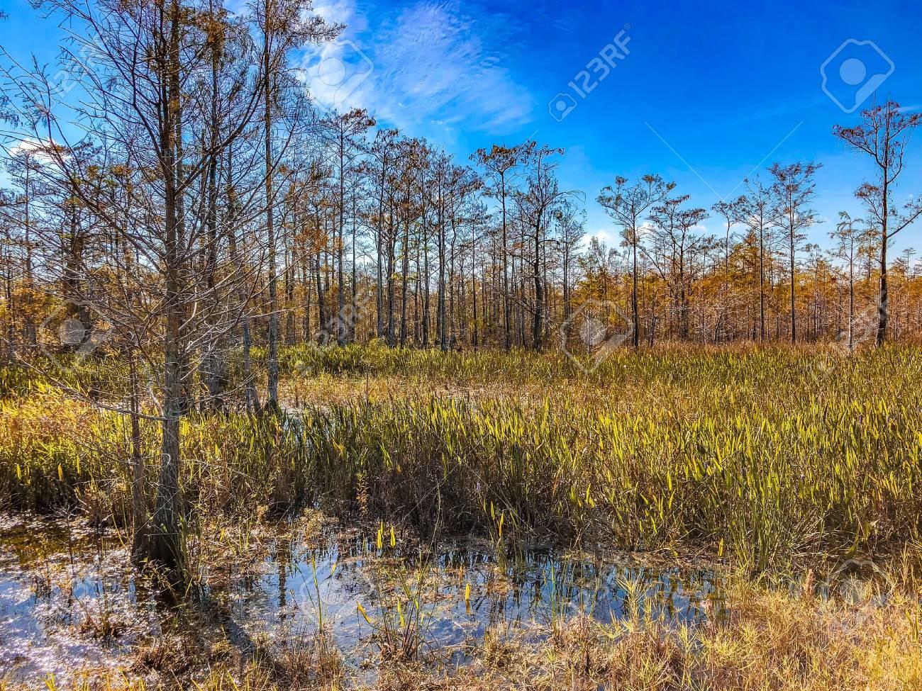 Loxahatchee Slough Natural Area Palm Beach Gardens, Florida... Stock ...