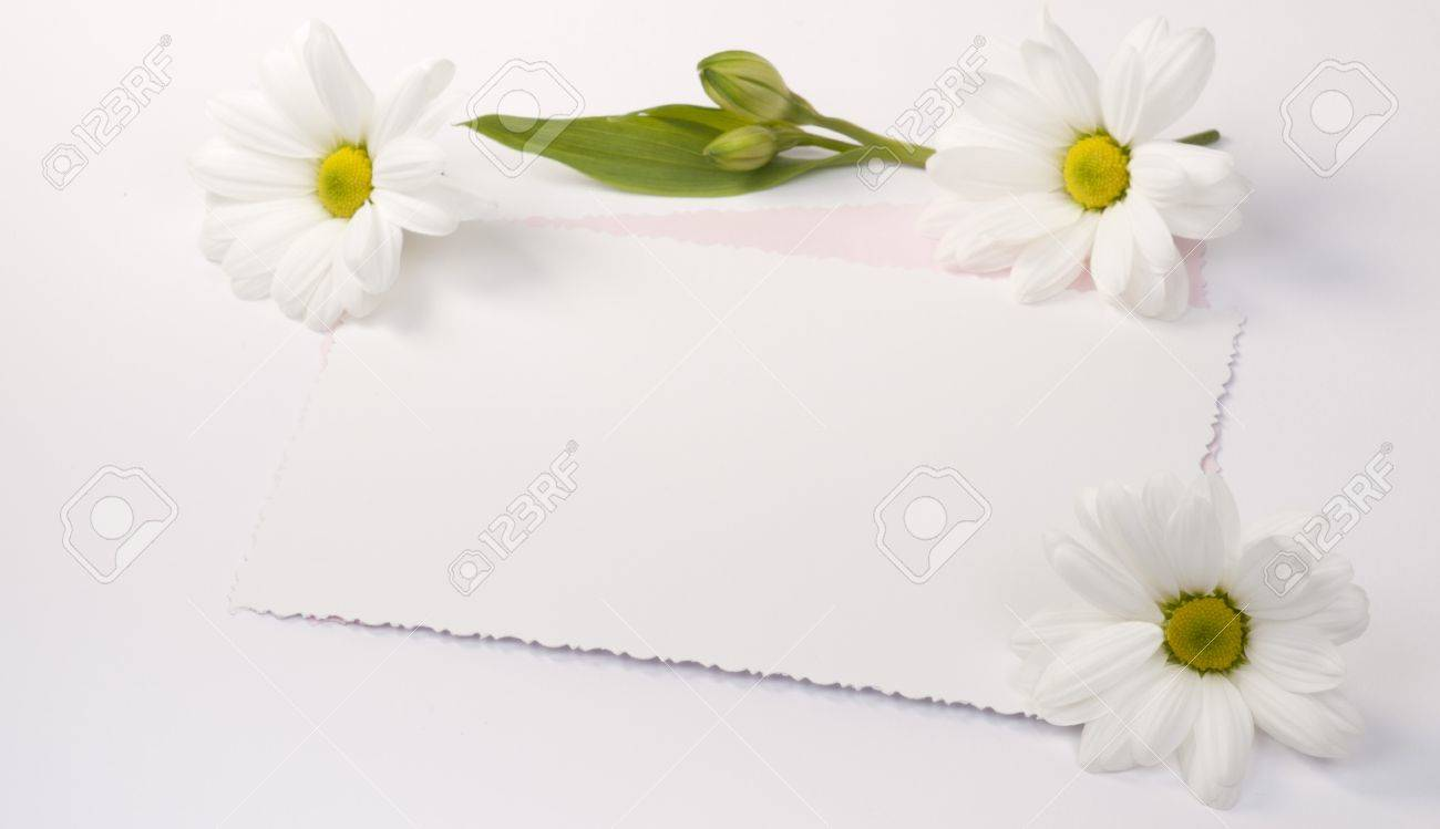Flower white chrysanths  with a card for text Stock Photo - 9363507