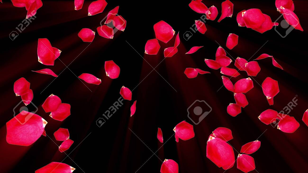 Rose petals falling from top to bottom in rays, computer generated. Rain of rose petals. 3d rendering of romantic background - 148038872