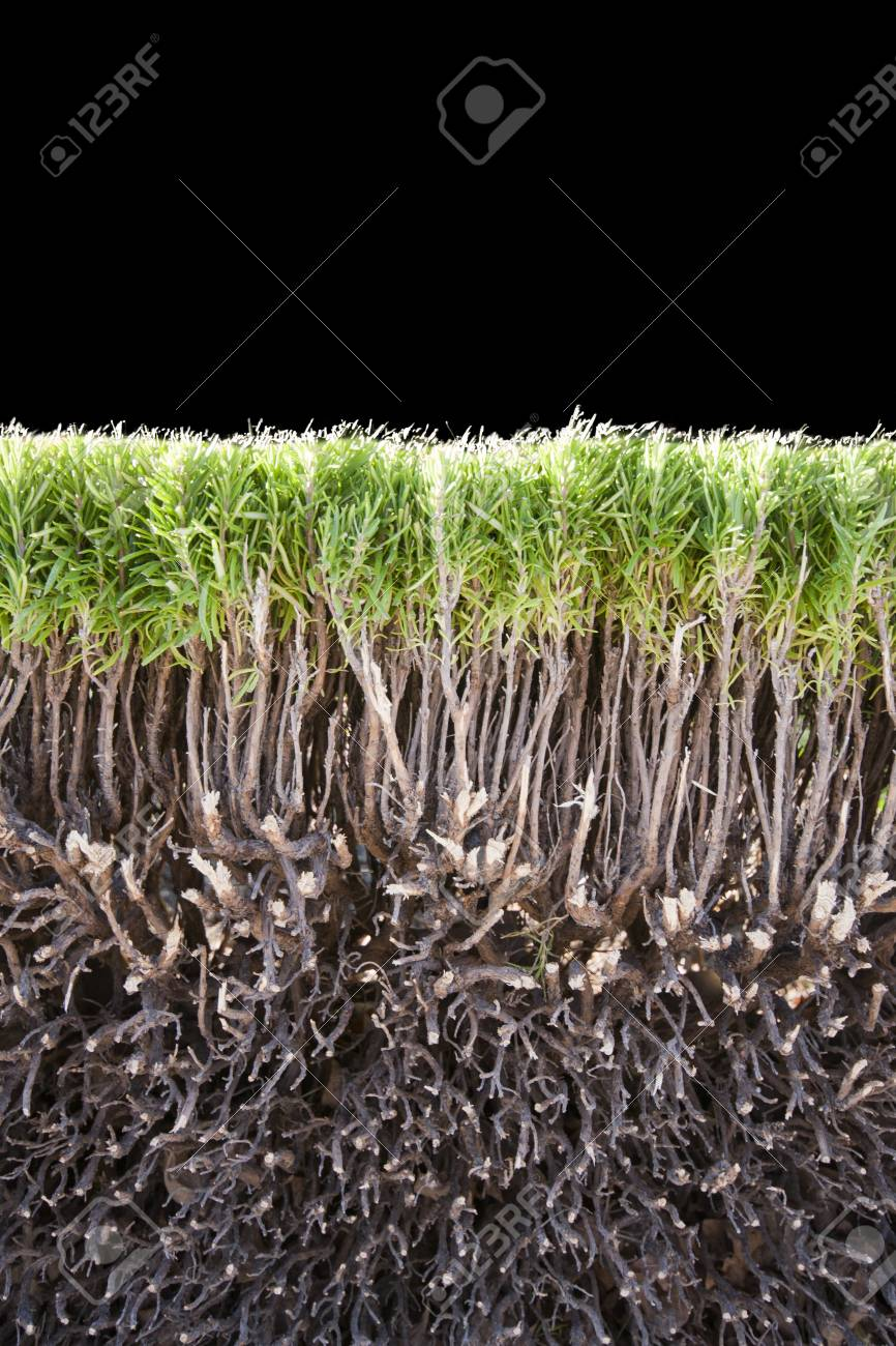 Cut of green bush isolated on black Stock Photo - 18192972