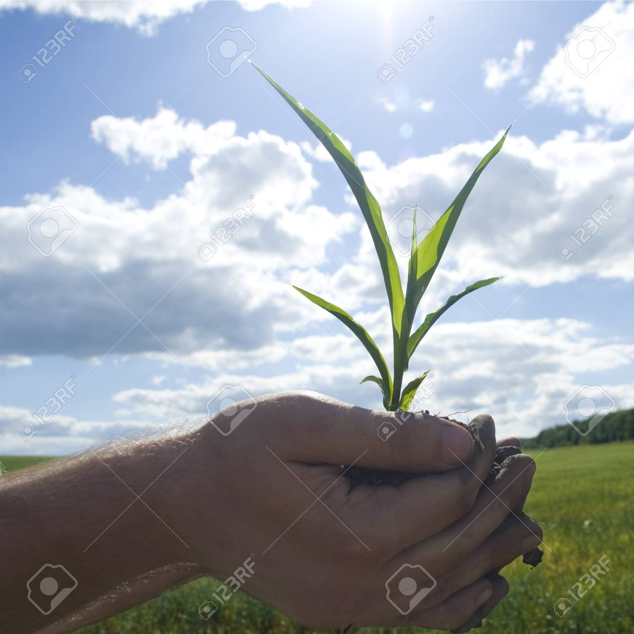 Young green plant in palms of hands Stock Photo - 18363185