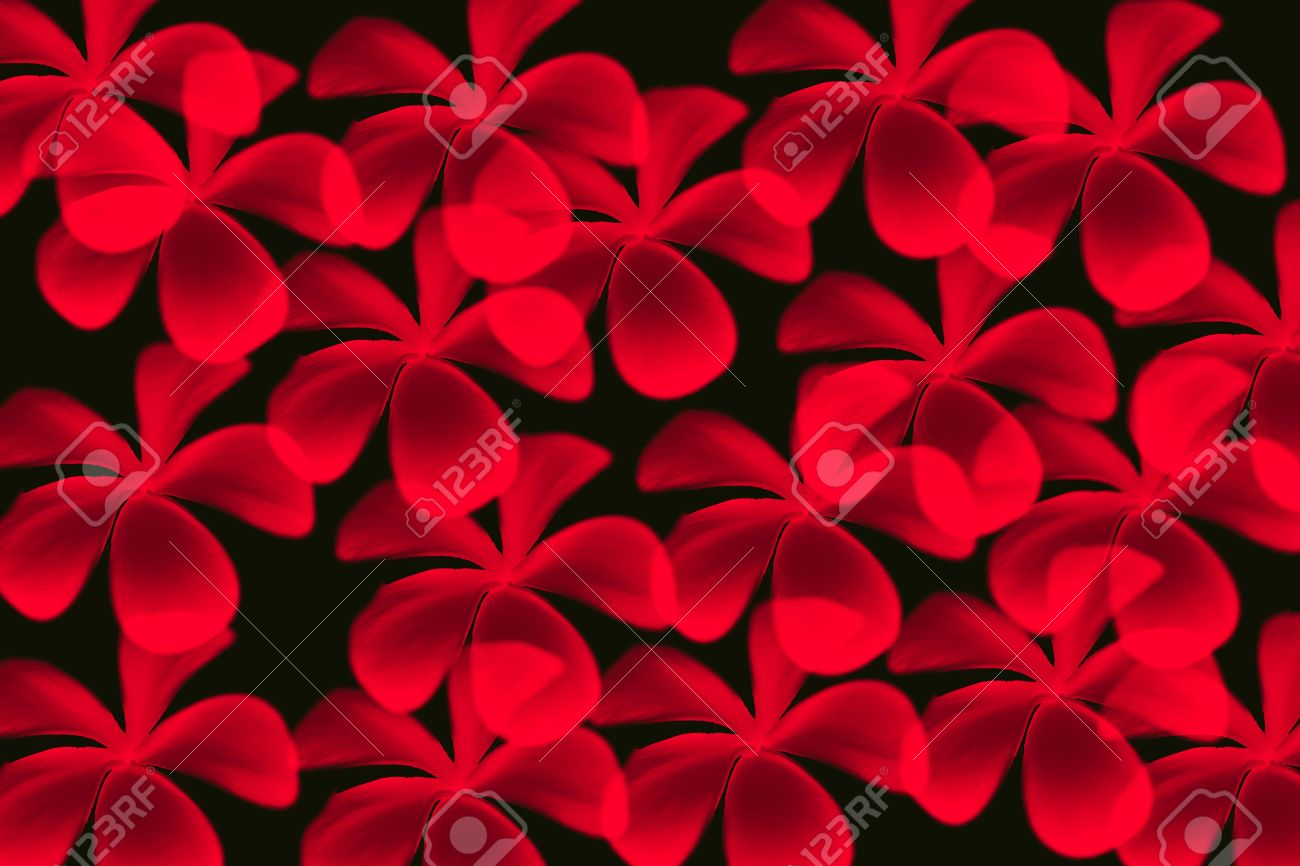 Red Frangipani Flower With Black Color Background Of Pattern Stock ...