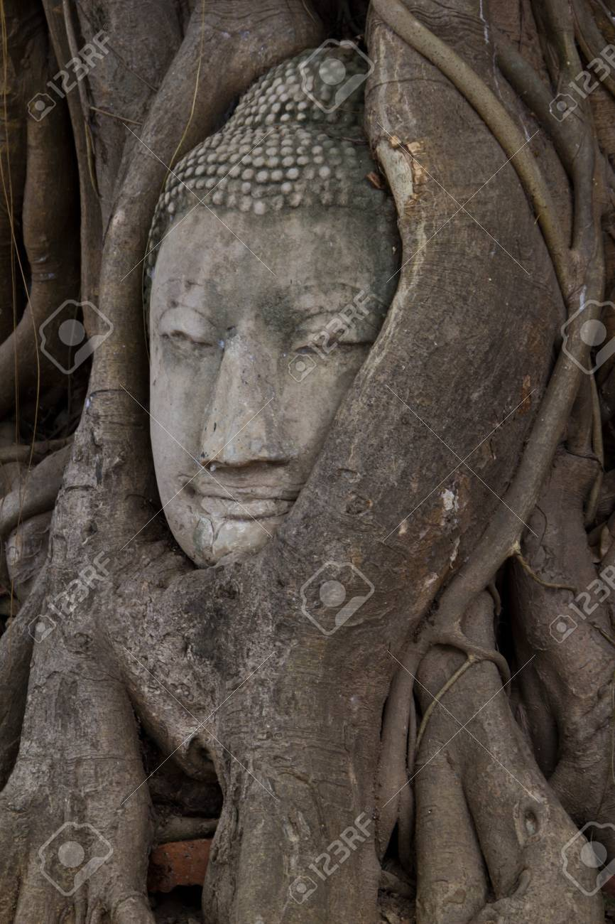 Buddha sculpture of head in roots at Wat Phra Mahathat, Thailand Stock Photo - 21998381