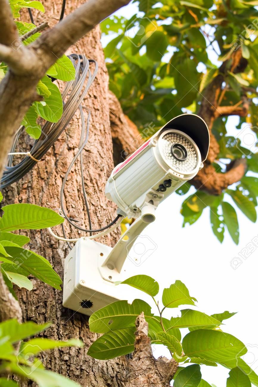 CCTV on tree Stock Photo - 14045905