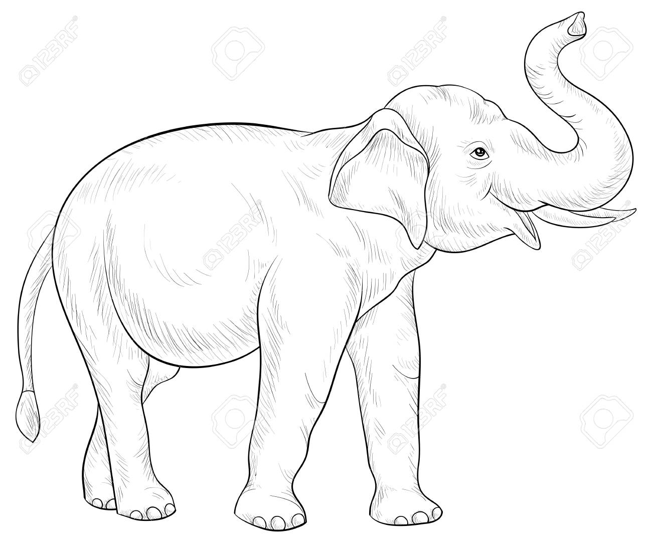 A cute elephant image for adults.Line art style illustration for relaxing activity.Poster design for print. - 114296256