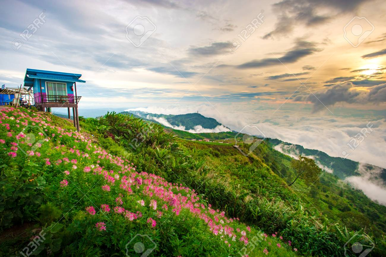 Small Home With Pink Flower Garden At Hill Beautiful Sunrise