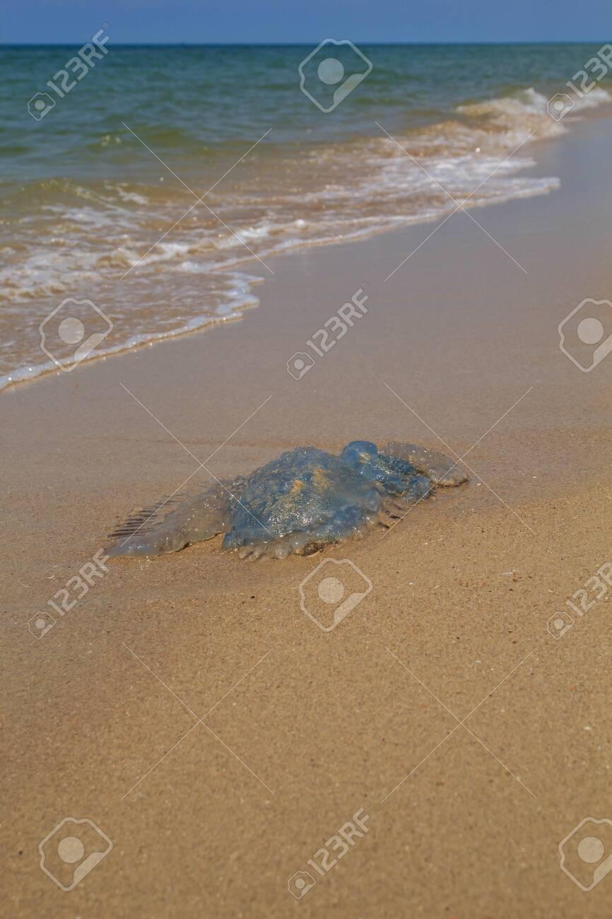 Beach Dangers uk Beach Animals Dangerous