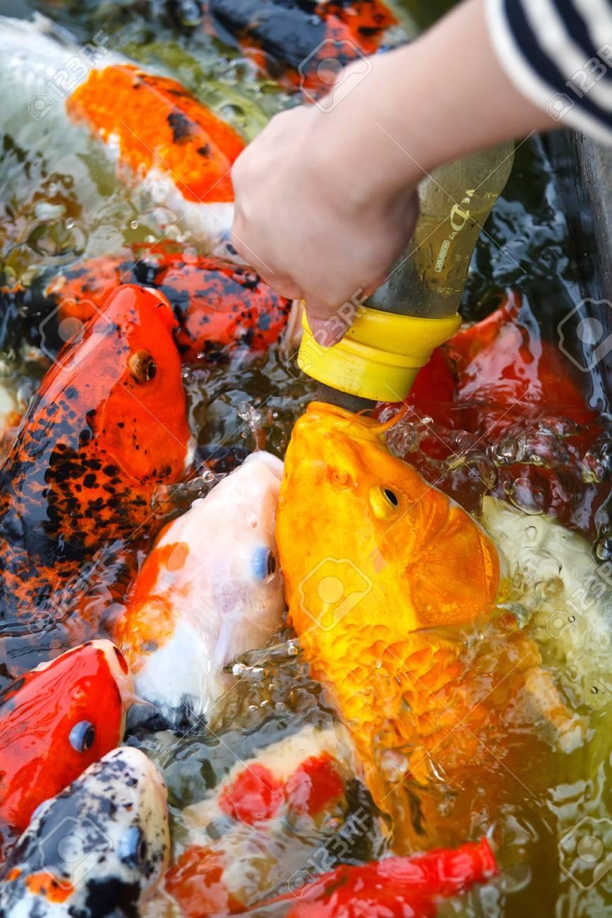 Feeding carp by hand Stock Photo - 13231703