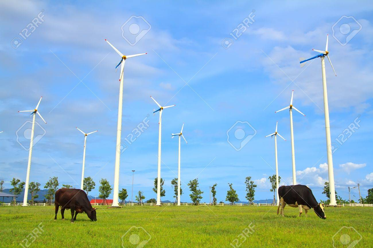 Wind turbine - renewable energy source with two Dairy cows Stock Photo - 15354588