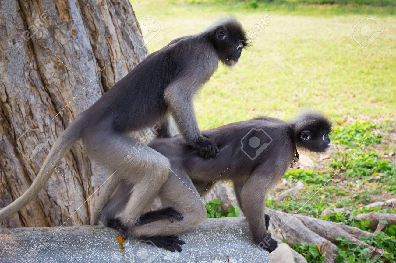 Monkey girl fuck porn thumbs