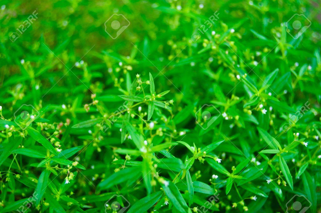 Small green leaves Stock Photo - 17772152