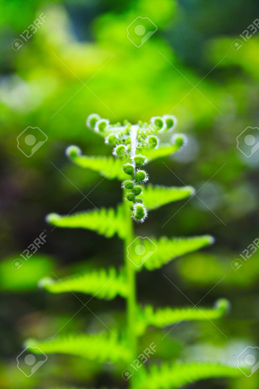 young fern leaf  nature background Stock Photo - 19900474