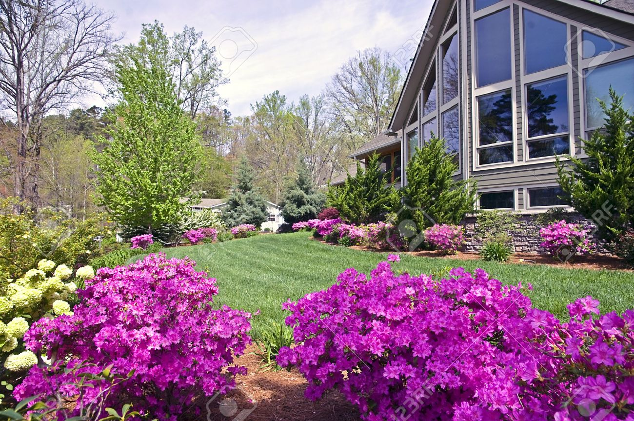 The Front Yard Of A Modern Home Showing The Spring Blooming Azaleas