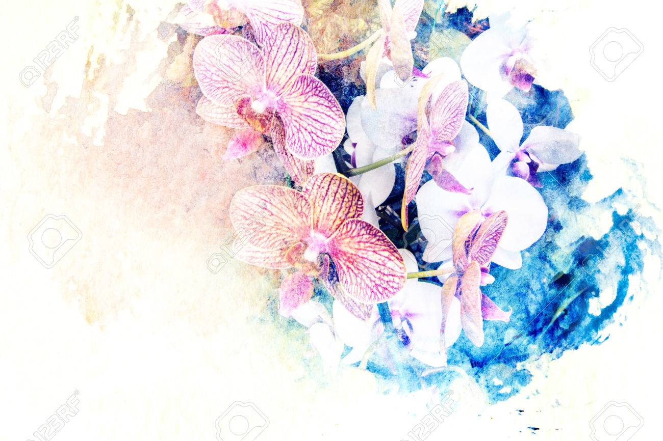 紙に描かれた花の胡蝶蘭の水彩イラスト の写真素材画像素材 Image