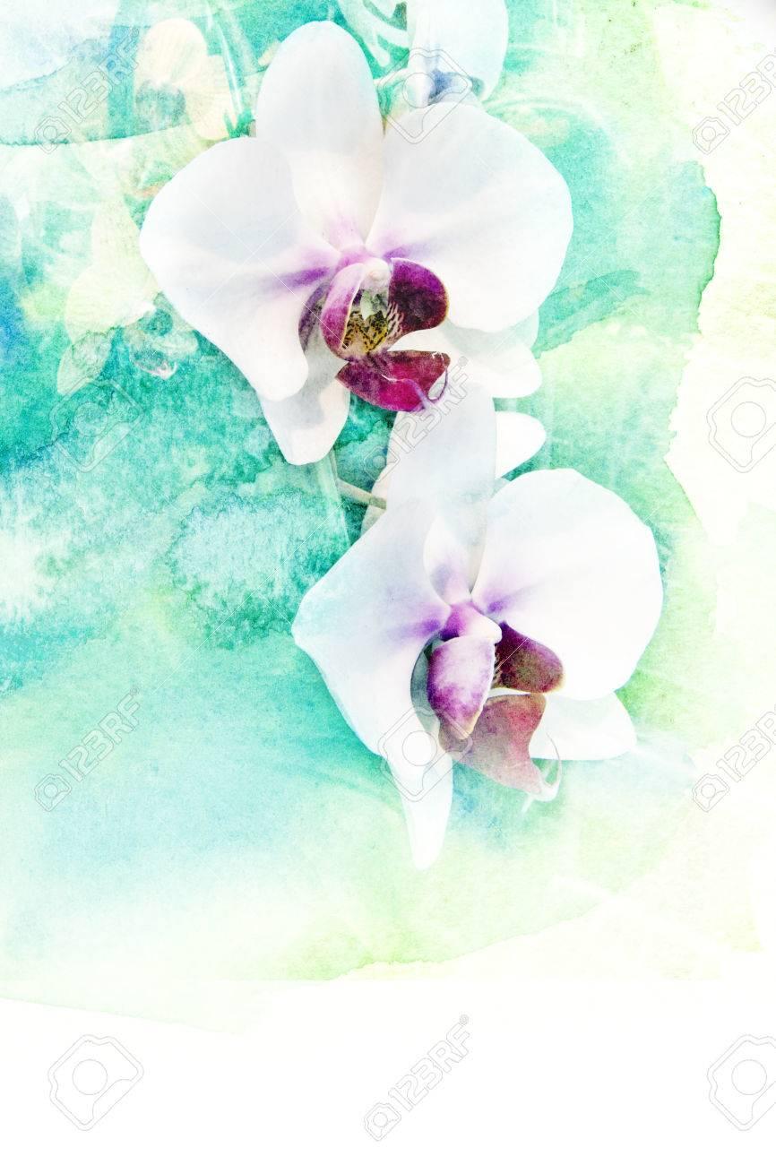花胡蝶蘭の抽象的な水彩イラスト水彩画紙に花の水彩イラスト の