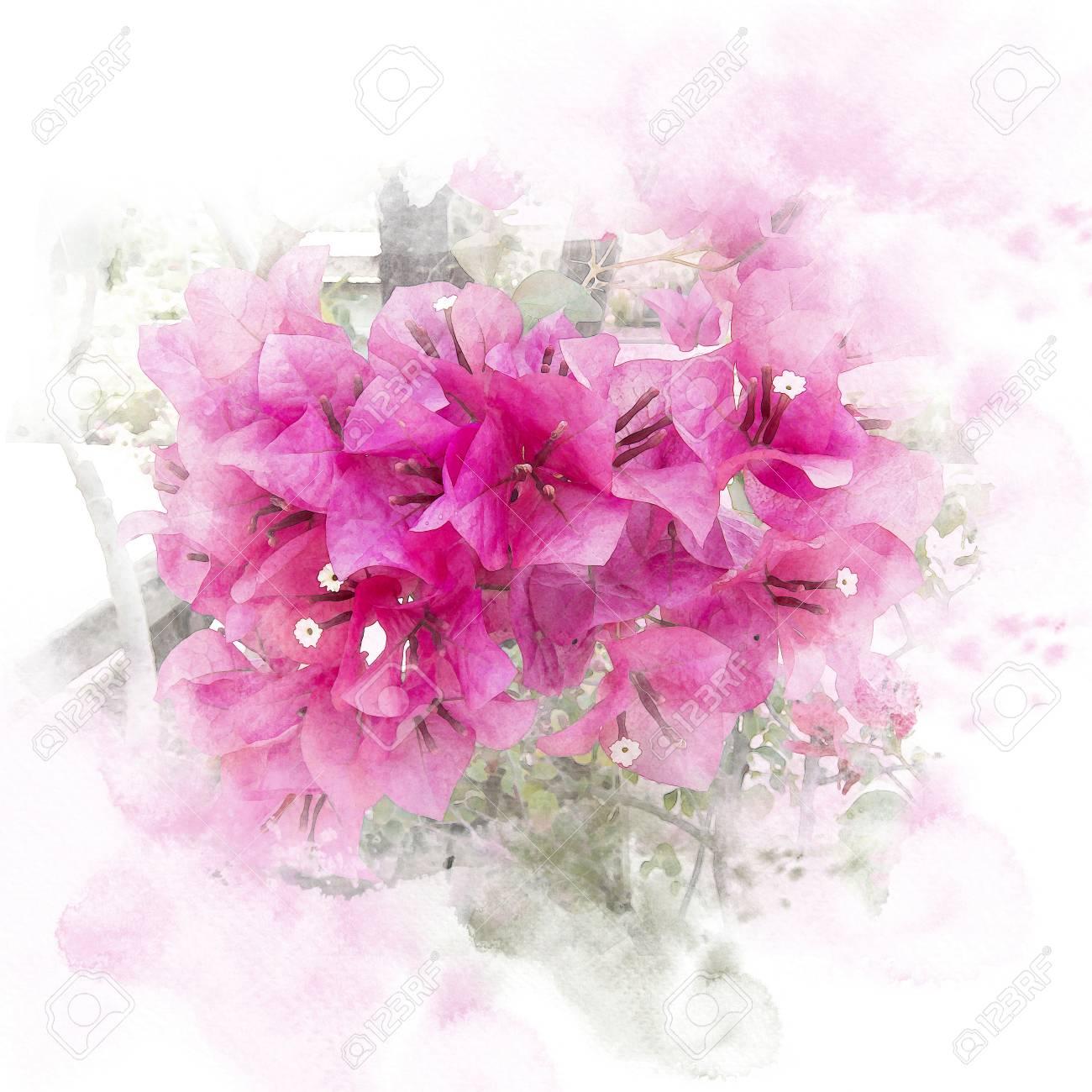 Illustration Of Blossom Pink Bougainvillea Paper Flower