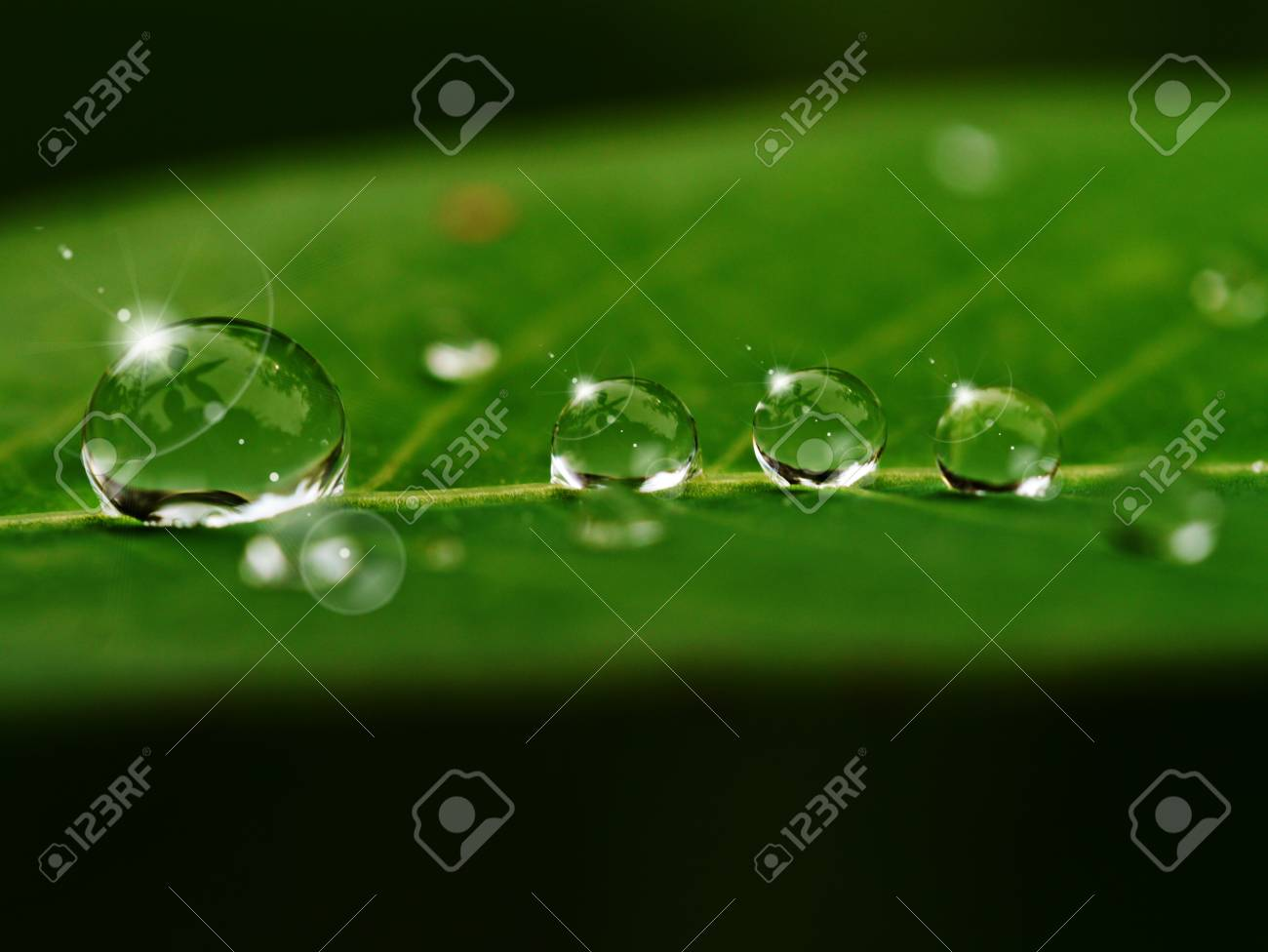 grass and dew in the morning Stock Photo - 16572465