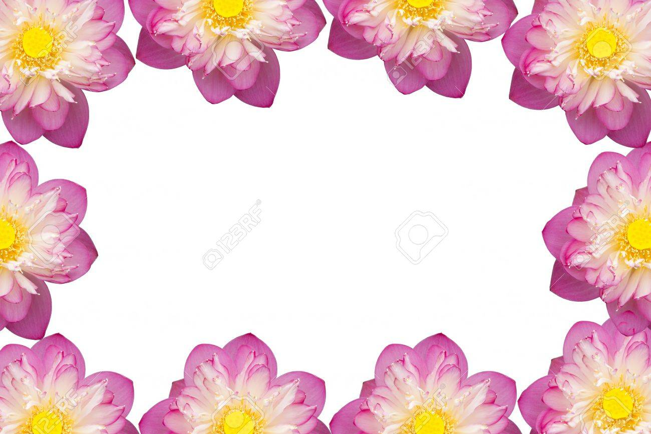 Pink beautiful lotus flower buddhist religious symbol stock photo pink beautiful lotus flower buddhist religious symbol stock photo 20524529 mightylinksfo