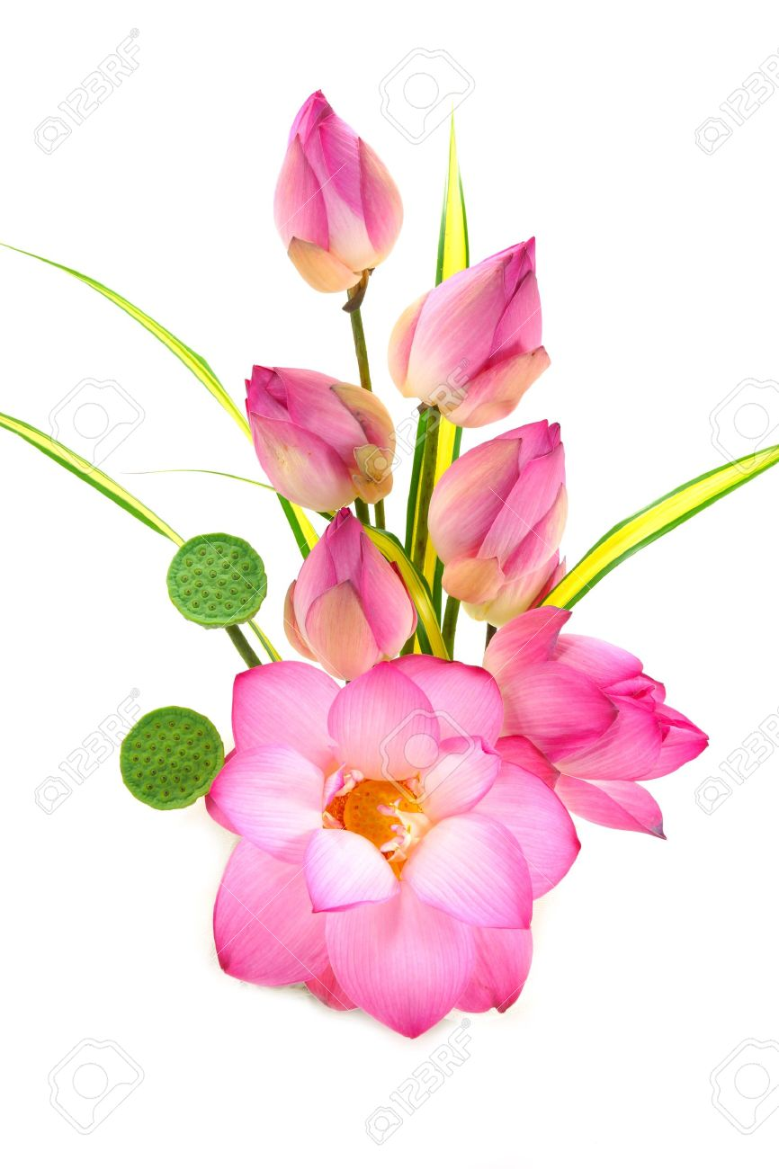 Flower Arrangements With Lotus On Isolate White Background. Stock Photo    20960865 Part 78