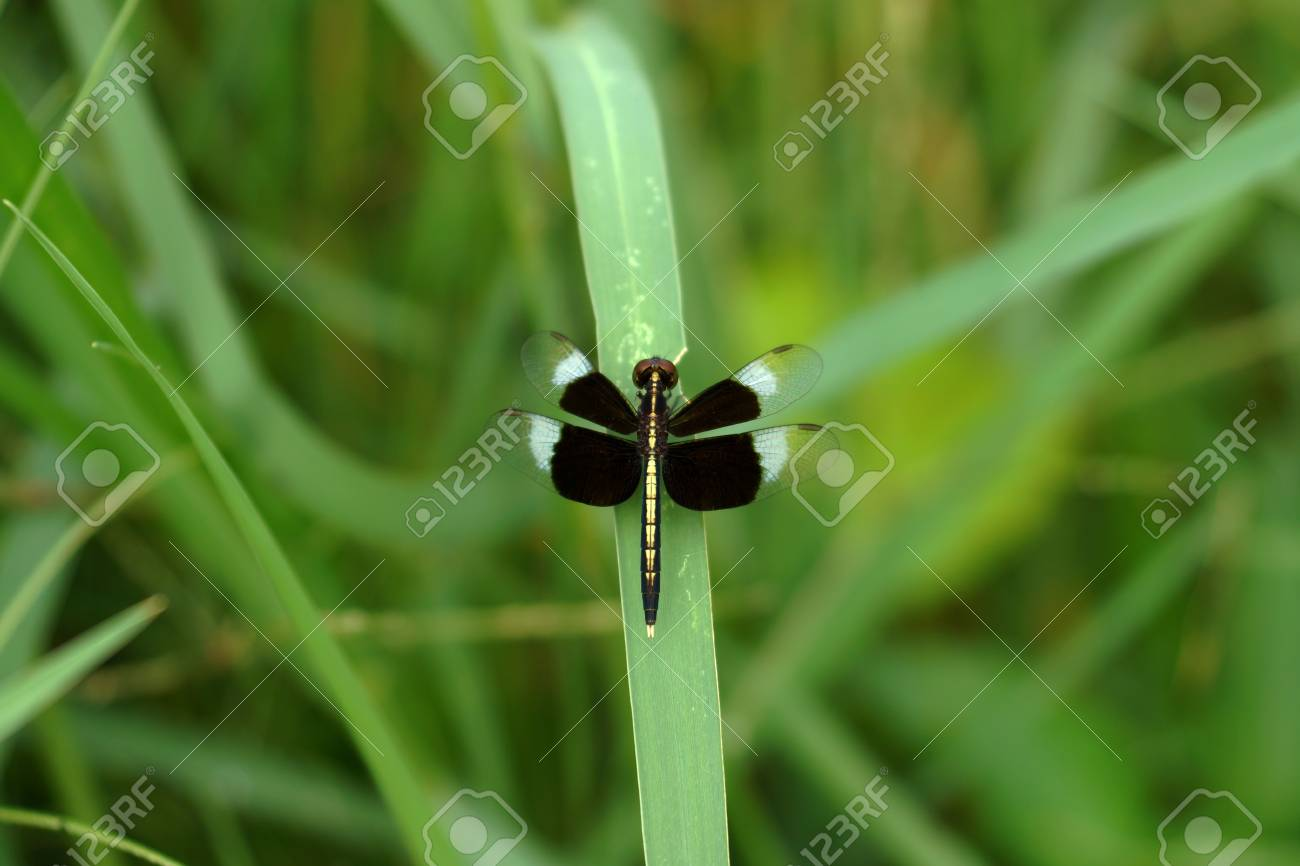 Black Dragonfly Stock Photo - 22763250