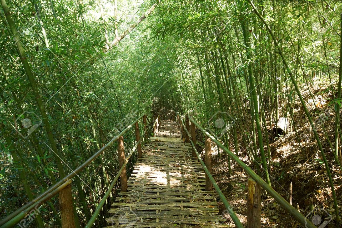 Natural corridors of bamboo forest. Stock Photo - 25160811