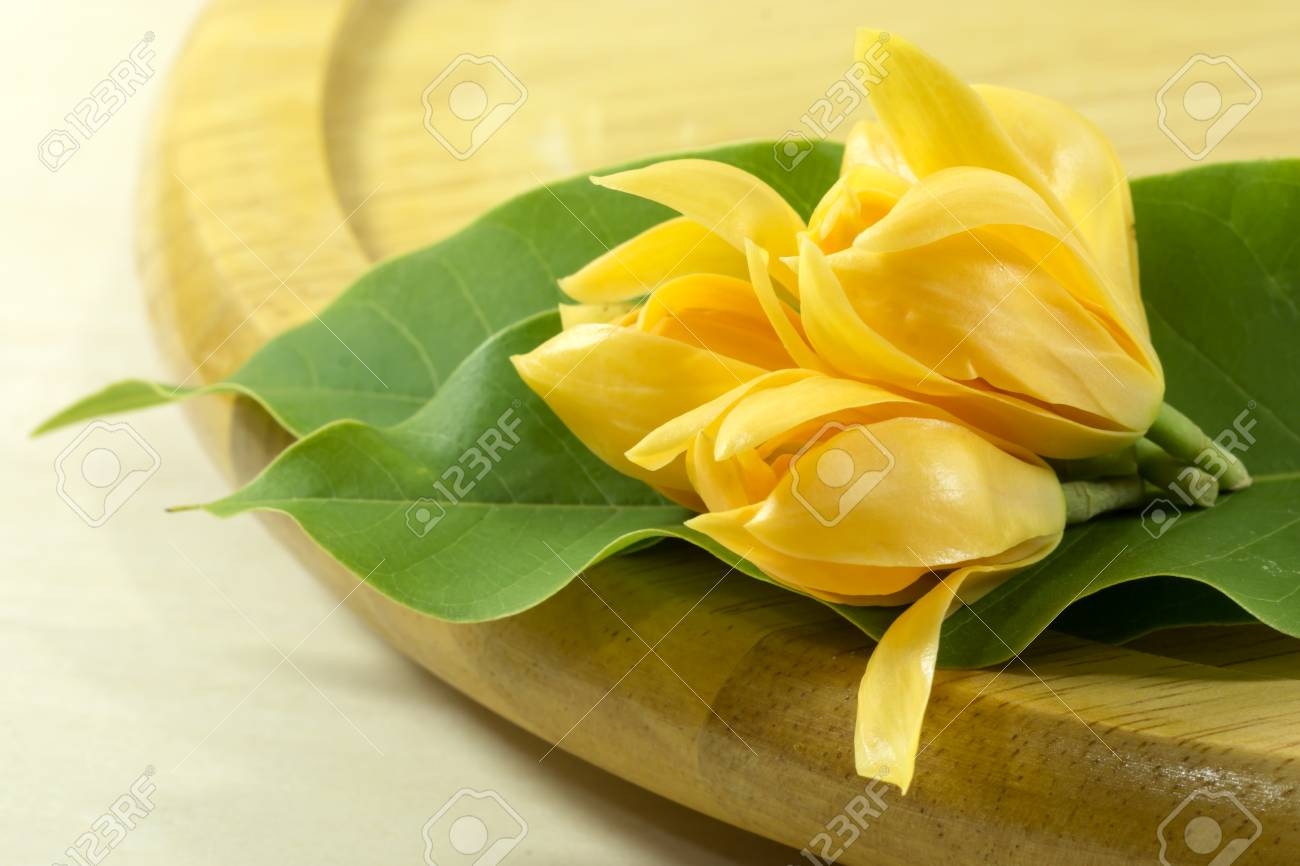 Fragrant Yellow Flowers Refreshing Are Blooming On The Wood Stock