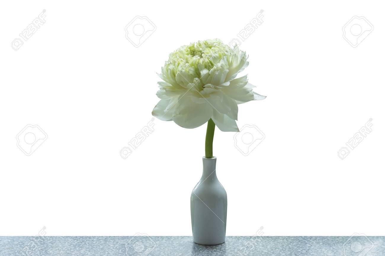 Flor De Loto Verde Magnolia De Loto álbum Plenum Gaertn