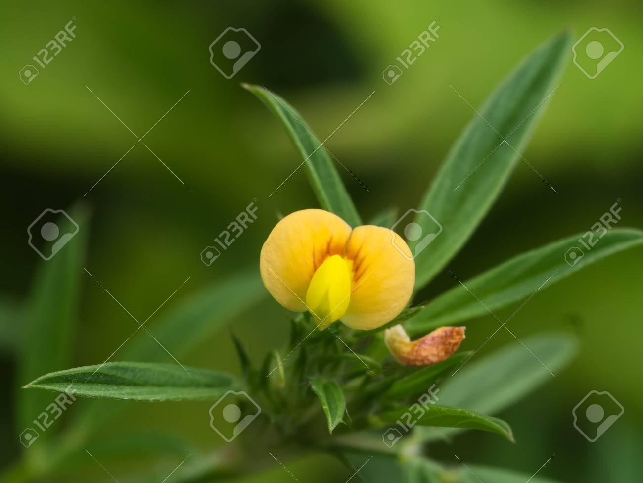 Small Yellow Flowers In The Garden Stock Photo Picture And Royalty