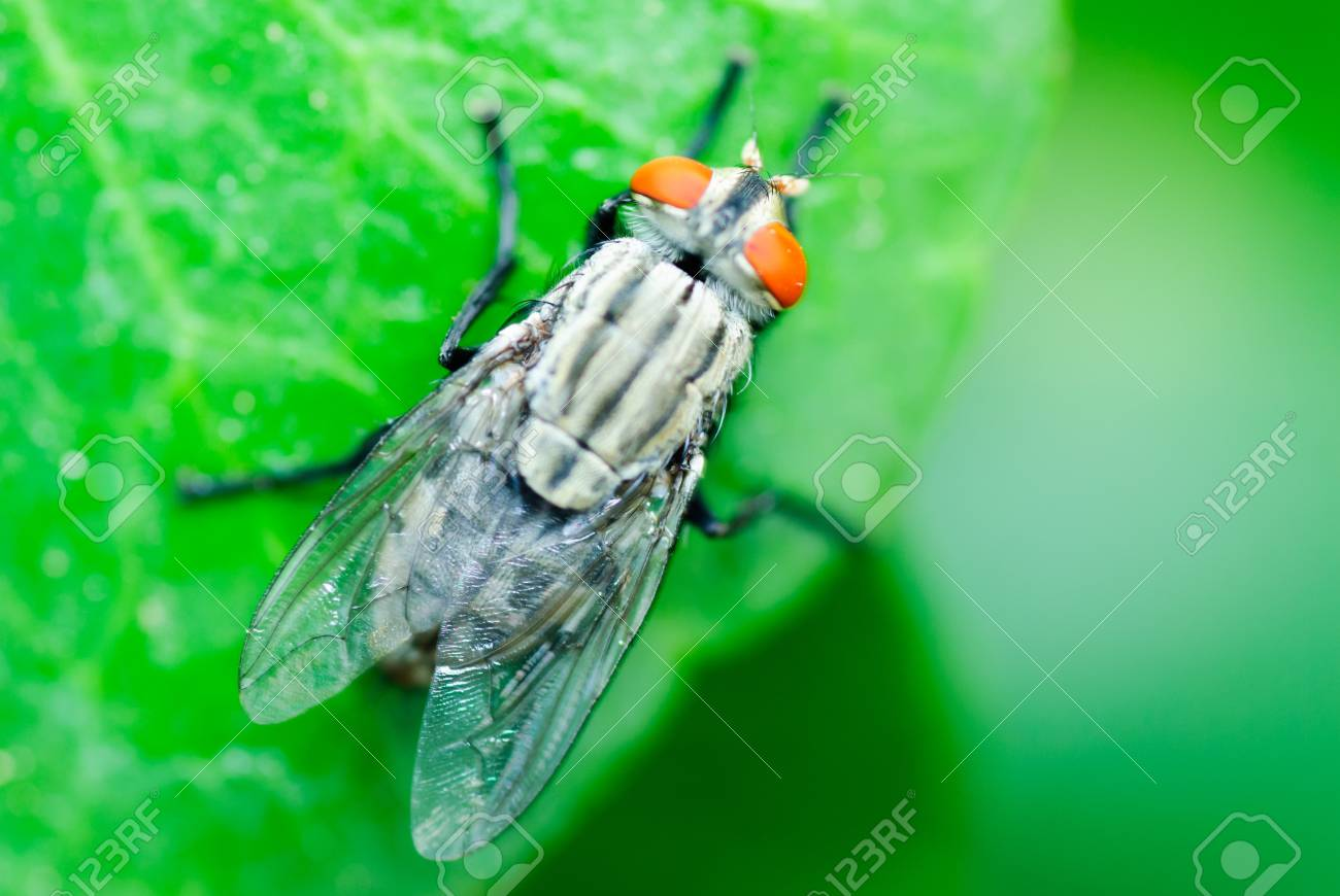 Fly on a leaf. Stock Photo - 17434593