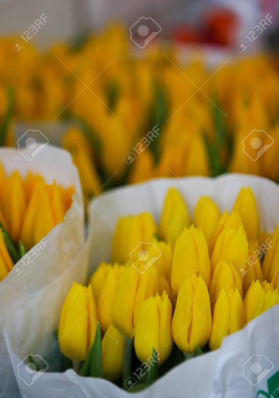 tulip in flowers market taken from Vienna Austria Stock Photo - 7241782