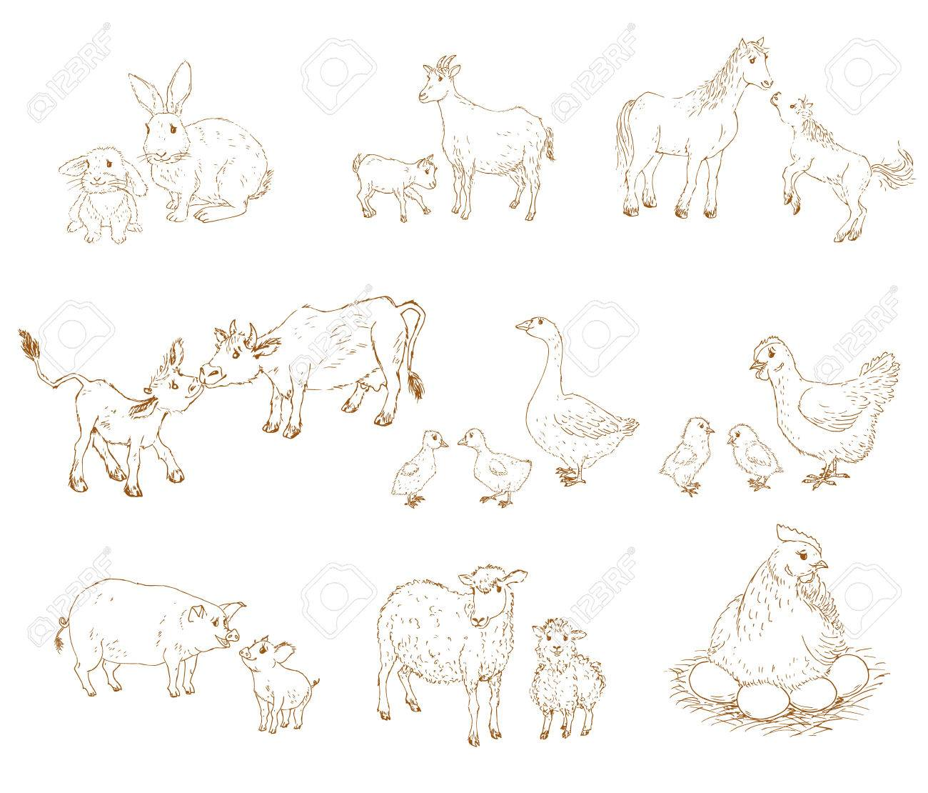 Farm Baby Animals With Mother Baby And Mother Animals Set Baby Royalty Free Cliparts Vectors And Stock Illustration Image 53255516