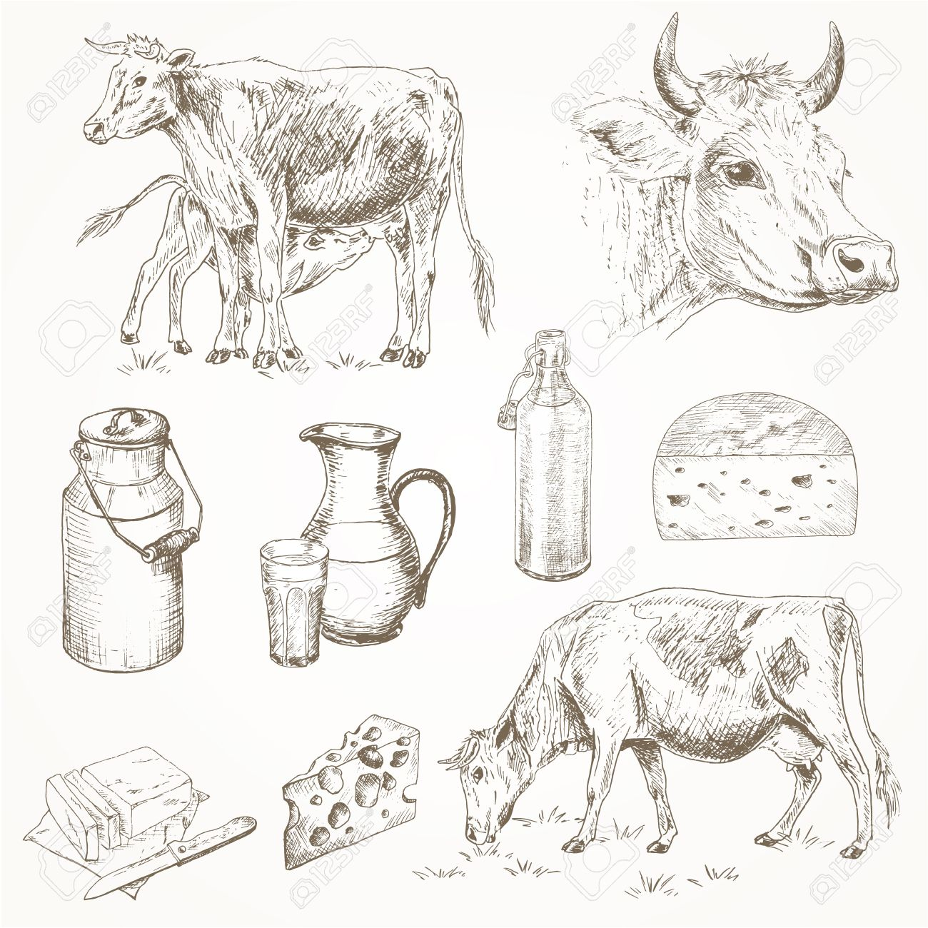 Dairy Cattle Farm Sketch Set Cow Eating Grass Cute Calf Drinks Milk Cows