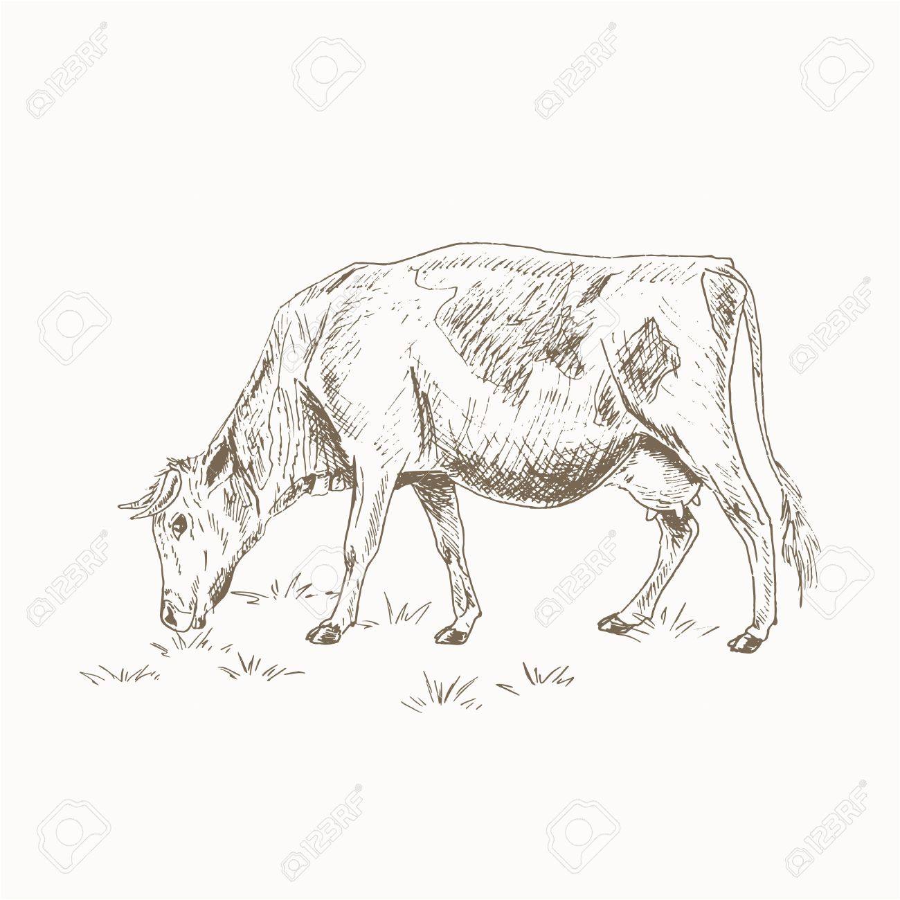 Cow Eating Grass Sketch Dairy Cattle Vctor Illustration Drawing Royalty Free Cliparts Vectors And Stock Illustration Image 55147014