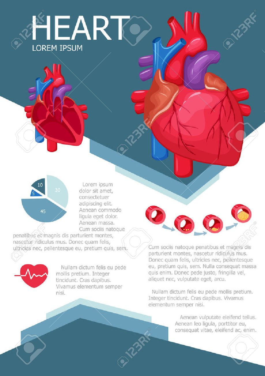 human heart infographic poster with chart diagram and icon