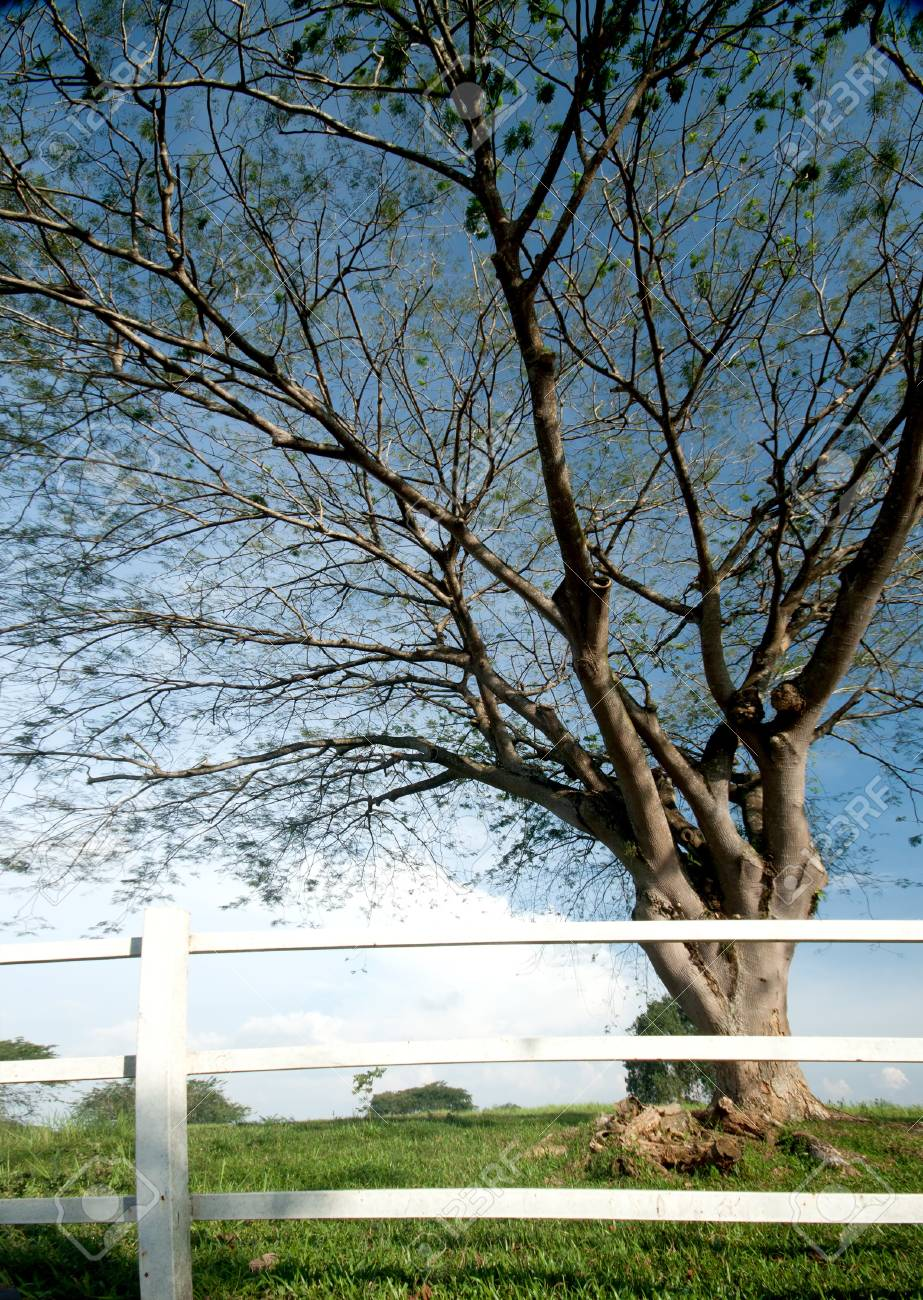 tree and fence with blue sky background Stock Photo - 8357442