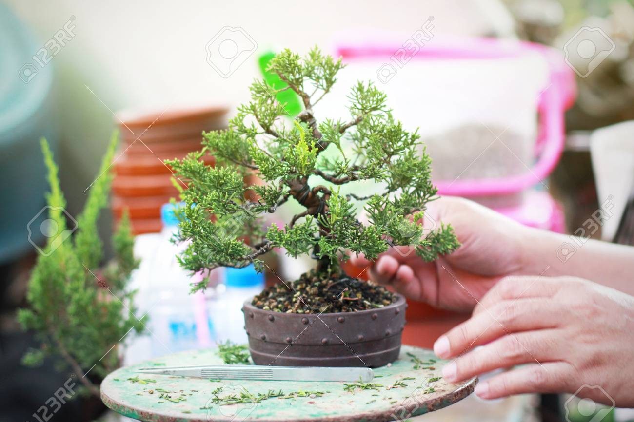 Bonsai Pruning Handmade Accessories Wire And Scissor Bonsai Tools Stock Photo Picture And Royalty Free Image Image 123454047