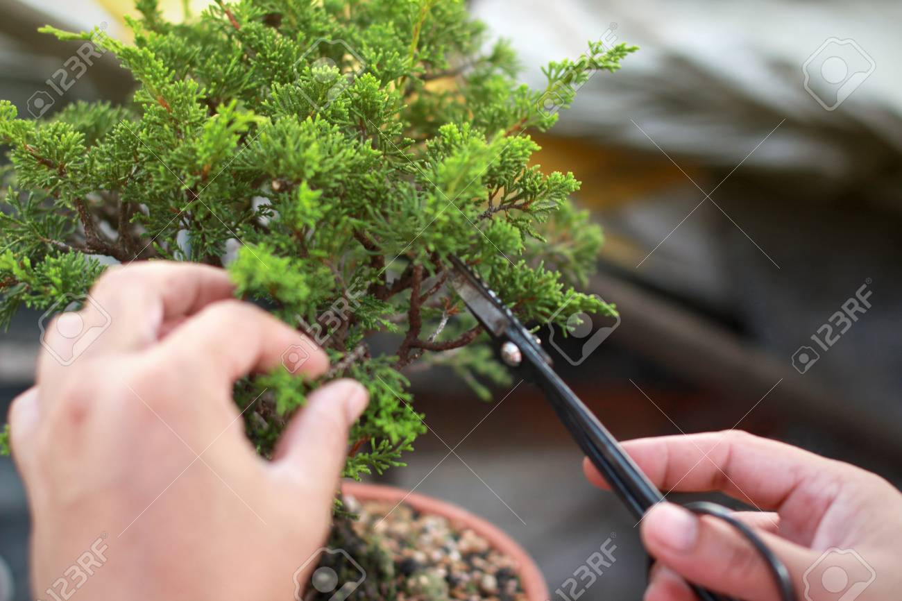Making Of Bonsai Trees Handmade Accessories Wire And Scissor Stock Photo Picture And Royalty Free Image Image 123454056