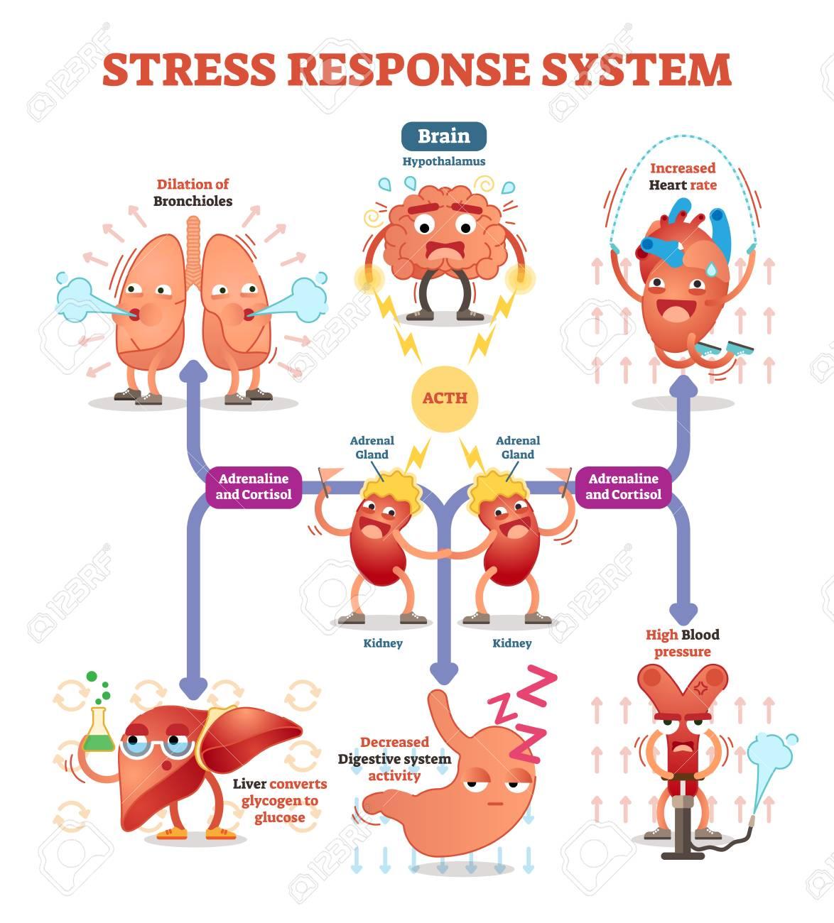 Stress response system vector illustration diagram, nerve impulses scheme. - 96364326