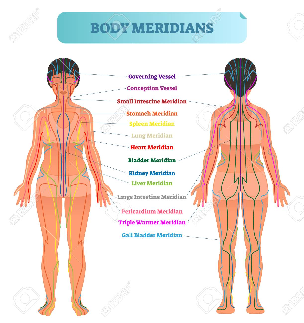 The Female Body Chart Bobi Karikaturize Com