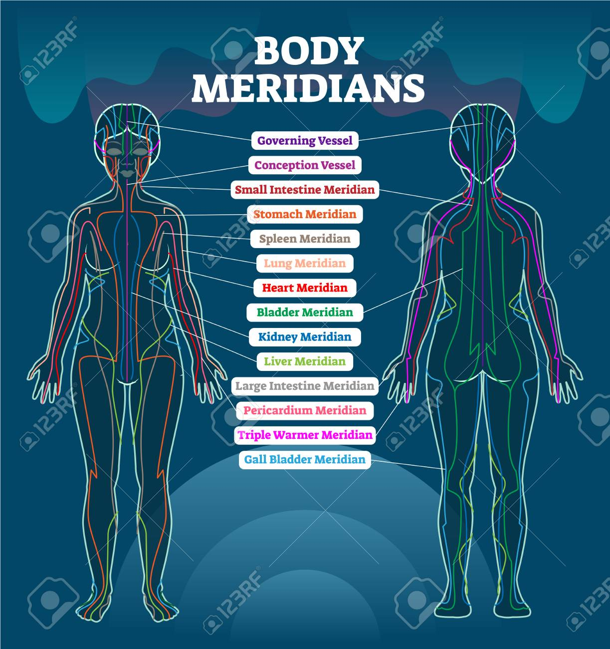 Body meridian system vector illustration scheme, Chinese energy acupuncture therapy diagram chart. Female body with energy paths and corresponding inner organs. - 101180048