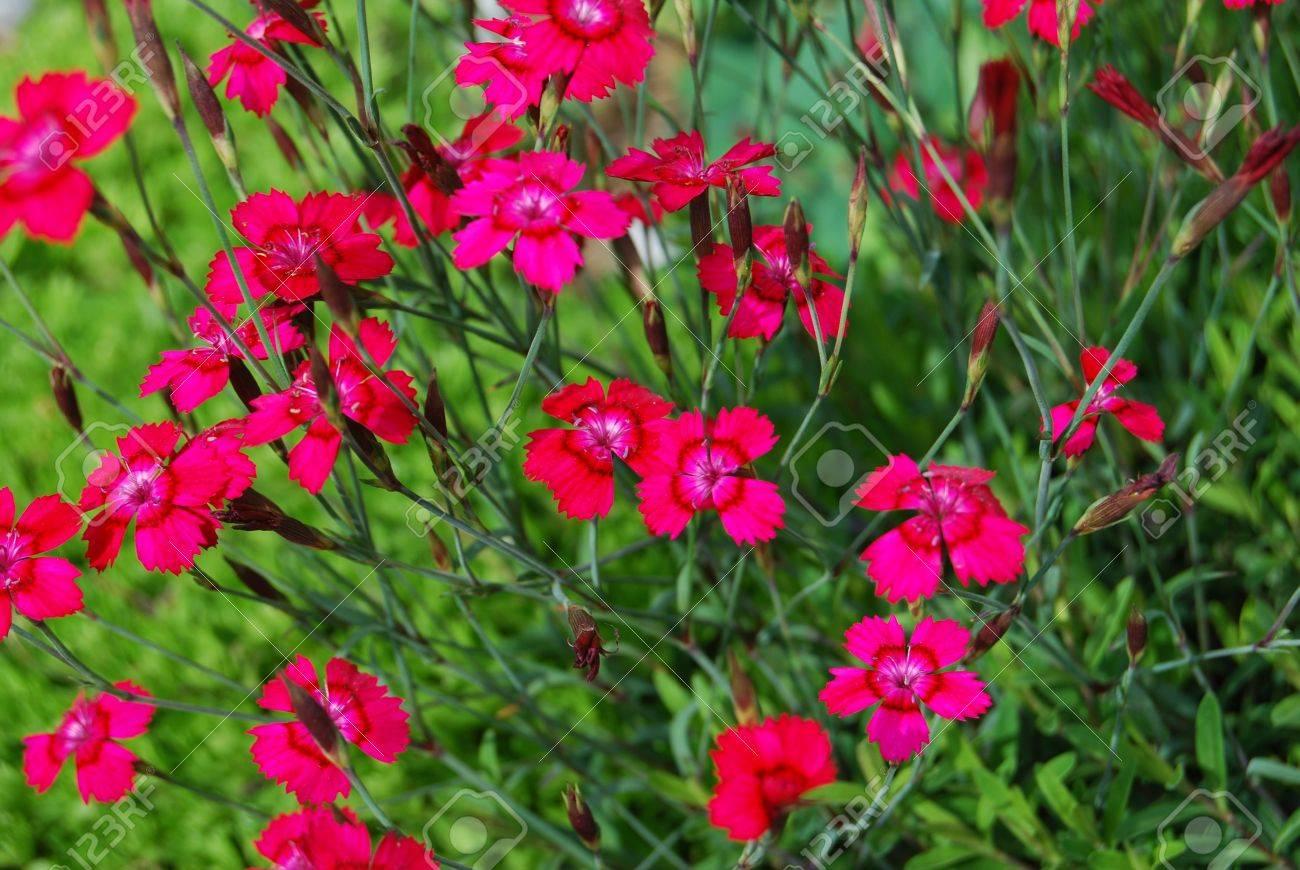 Un Beau Jardin Alpin Contenant Une Grande Variété De Plantes De ...