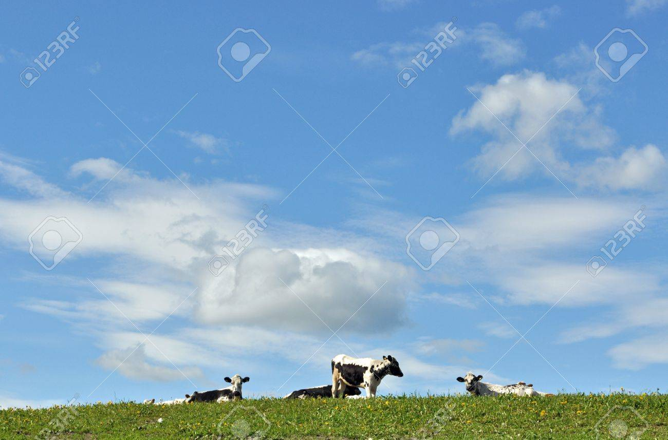 Cows Stock Photo - 7307093