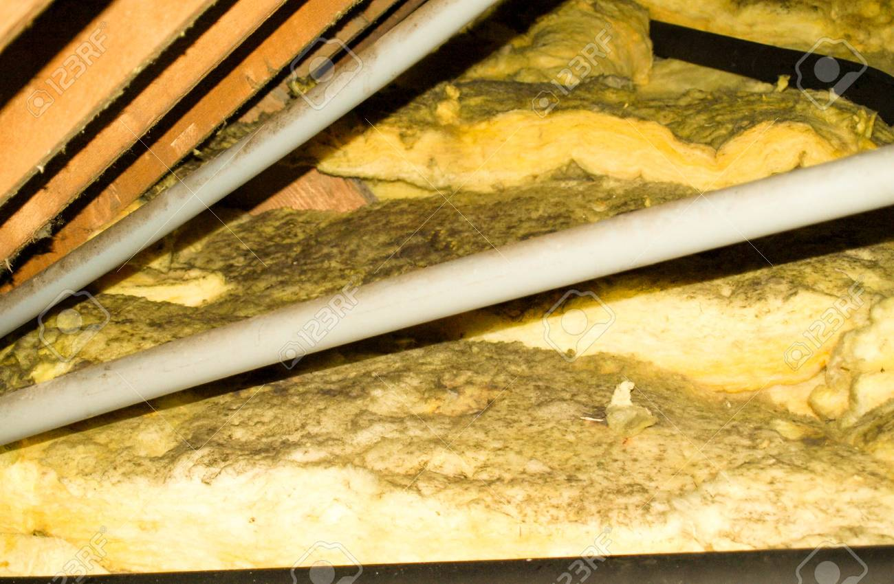 A typical household attic that is covered in mould spores. - 90249540