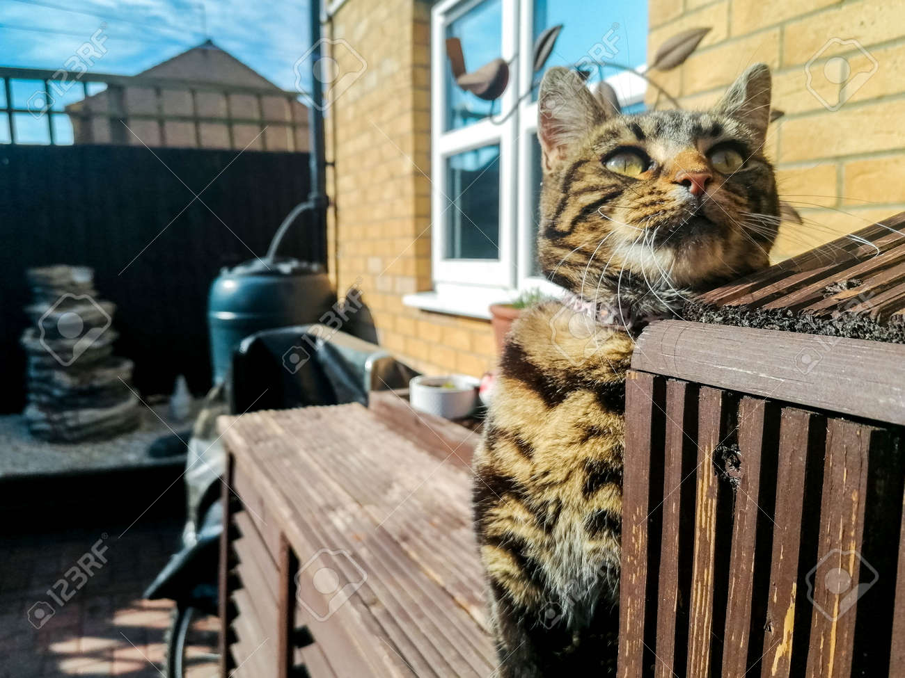 A dark coloured cat enjoys the heat of the sun, during summertime, and relaxes in the sunshine. - 168149670